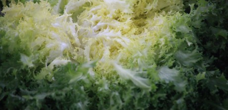 Lettuce - cropped